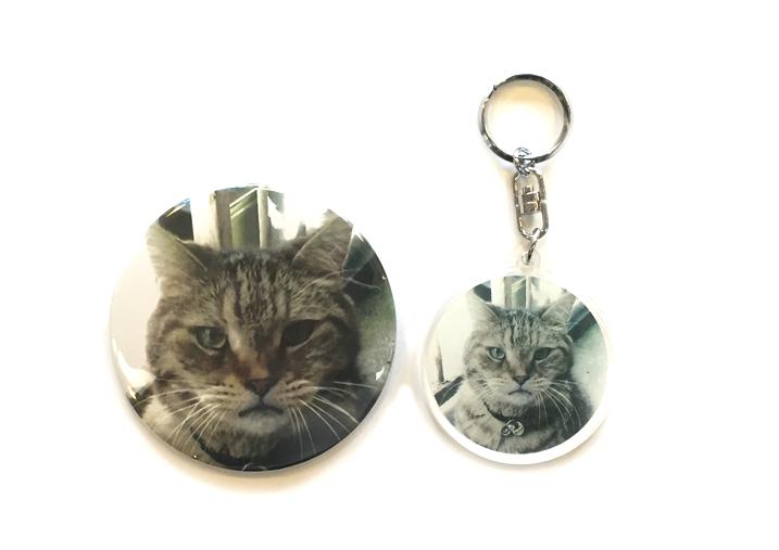 cat_main